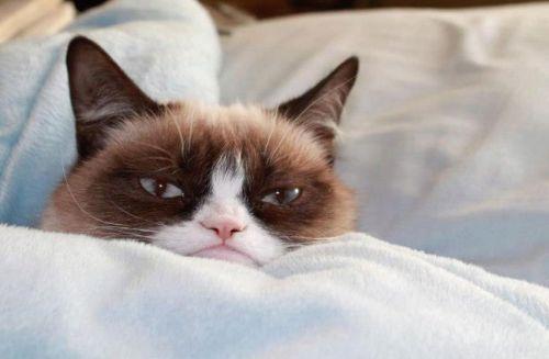 Grumpy-Cat-79r